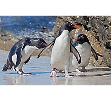 The Rocky Horror Show (Rockhopper Penguins, Falklands) Photographic Print