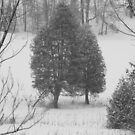 Snowing - Black and White by Tracy Wazny