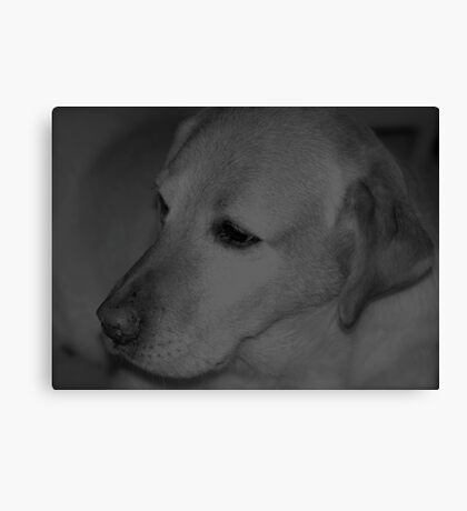 Lab Canvas Print