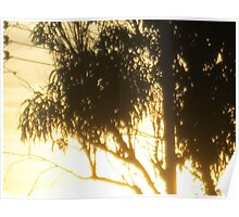 burning sun behind the trees  Poster