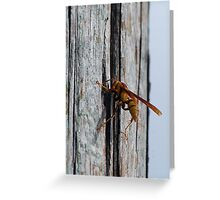 Yellow wasp gathering fibers  Greeting Card