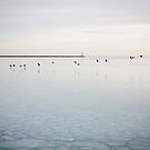 Birds on Lake Michigan by AquaMarina