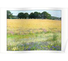 cornflower fields Poster