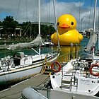 Can I park my duck here ? by Roy  Massicks