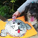 Doggie birthday party :) by JudyBJ