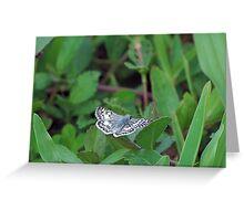 Tropical Checkered Skipper on a leaf Greeting Card