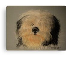 Bearded Collie sketch Canvas Print