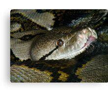 Reticulated Python Closeup Canvas Print