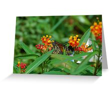 Monarch sipping nectar Greeting Card
