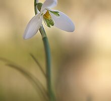 Spring Messenger by AnnieSnel