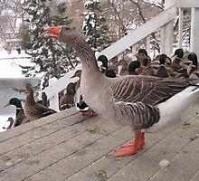 Pilgrim Goose  by SWWinchell