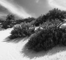 Dune Ecology  by Barry J Merluzzo