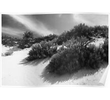 Dune Ecology  Poster