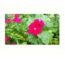 Pretty Pink Red Flower Art Print