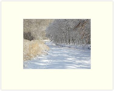 Silent Serenity by NatureGreeting Cards ©ccwri