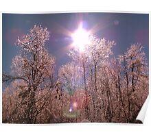 Winter Optics Poster