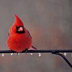 Northern Cardinal, Card by Brooke Martin Photography