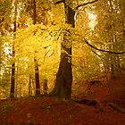 THE DANCE OF THE TREES by leonie7