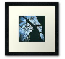 below the tree. Framed Print