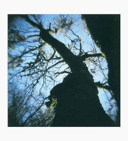 below the tree. Photographic Print