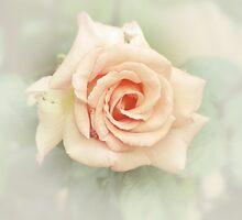 Vintage rose by Patrick Reinquin