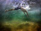 Hidden View ~ Dive by Annette Blattman