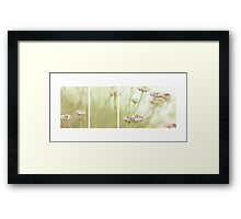 A Hint of Pink Framed Print