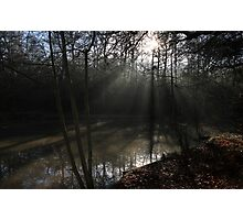 The Sun in the Woods Photographic Print