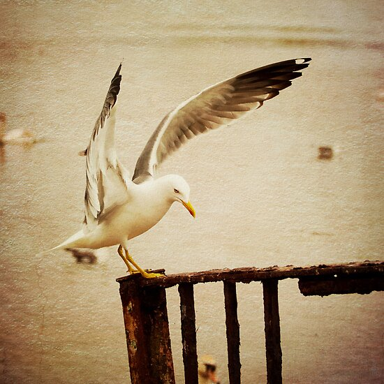 The Seagull has Landed by Liz Scott