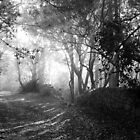 Walking Into the Light B&amp;W by trish725