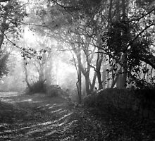 Walking Into the Light B&W by trish725