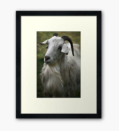 A Friendly Goat Framed Print