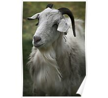 A Friendly Goat Poster