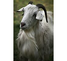 A Friendly Goat Photographic Print
