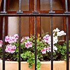 Geraniums in Window by Silvianna DiSalvo