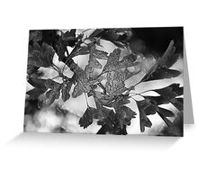 Wrapped Leaves Greeting Card
