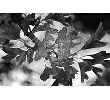 Wrapped Leaves Photographic Print