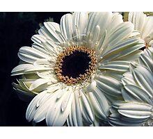 White LoVe Photographic Print
