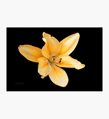 Peach Lily on Ebony Photographic Print