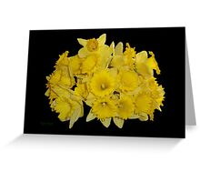 Daffodils on Ebony Greeting Card