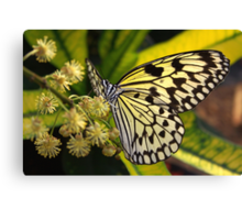 Flower Paper Kite - Idea leuconoe Canvas Print