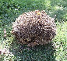 large hedgehog by brucemlong