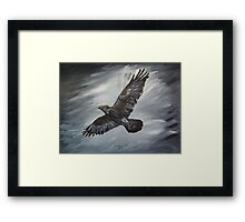 Black Raven.... Framed Print