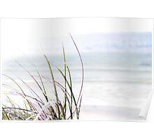 sand dune grass Poster