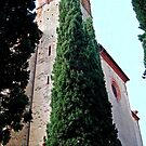 Straight and Tall-Sant' Anna in Comprena-Tuscany by Deborah Downes
