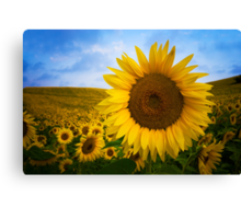 Sunflower Field in Valensole - Provence, France Canvas Print
