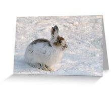 Winter Snowshoe Hare Greeting Card