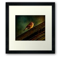 Up On The Roof Framed Print