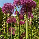 The Towers of Allium, Hampshire by Alex Cassels