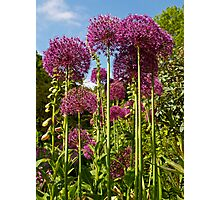 The Towers of Allium, Hampshire Photographic Print